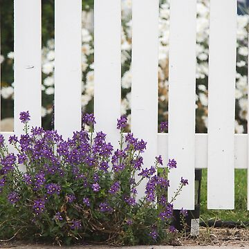 White Picket Fence by cmariephoto