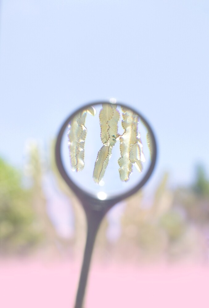 Cactus Magnified by smwimages