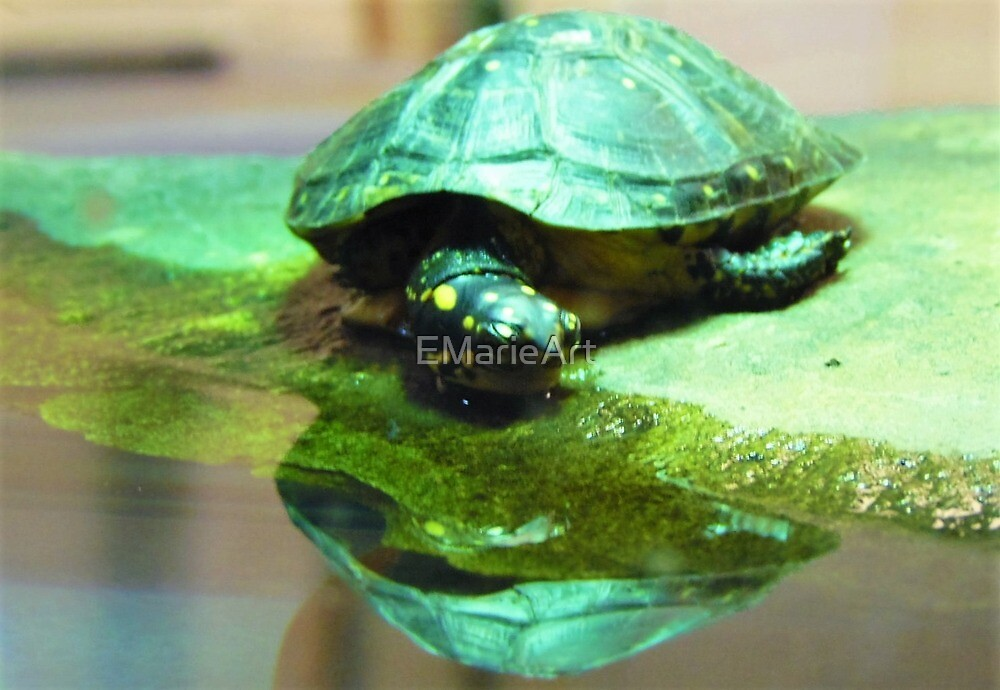 Totally Turtle by EMarieArt