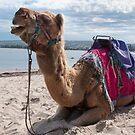 Camel by Werner Padarin