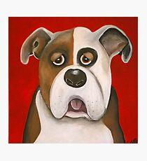 Winston the dog Photographic Print