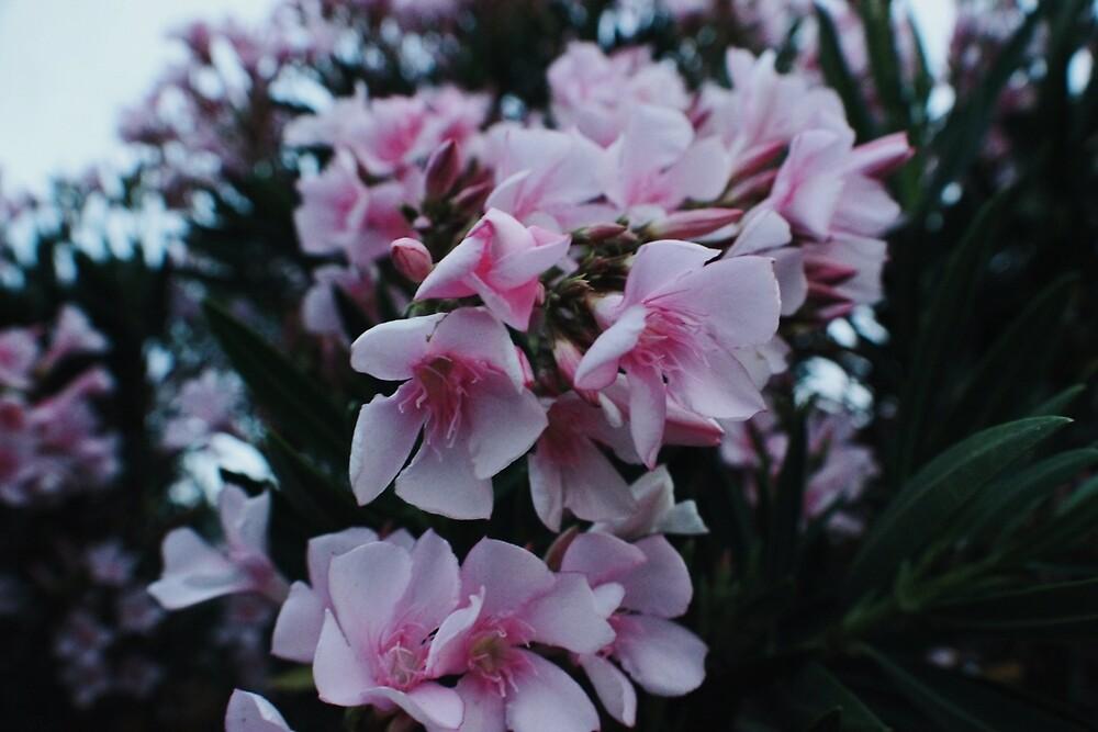 Pink Flower by briannaraq