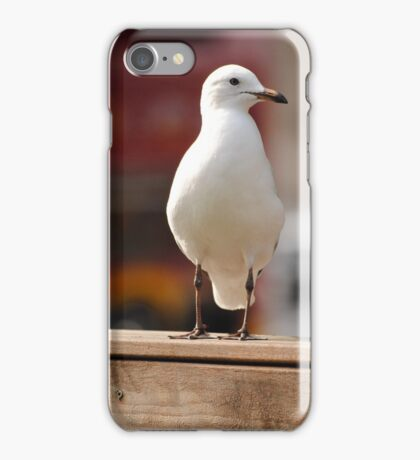 A Nice Photo Of A Seagull iPhone Case/Skin