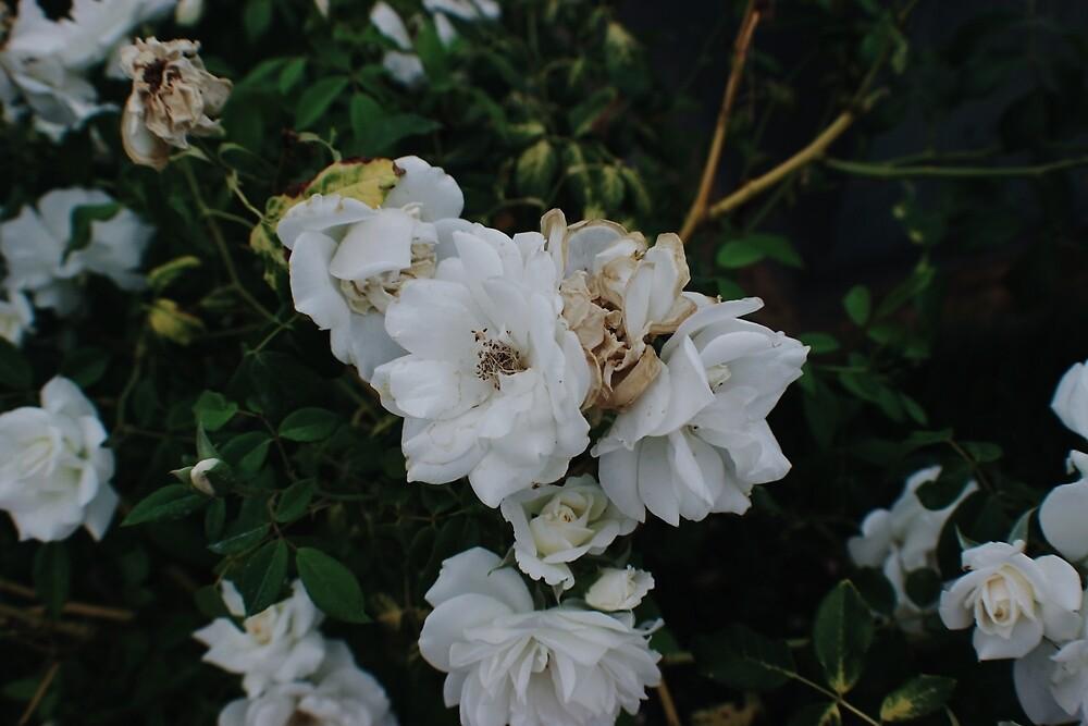 White Flower by briannaraq
