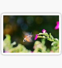 Hummingbird Hawk Moth Sticker