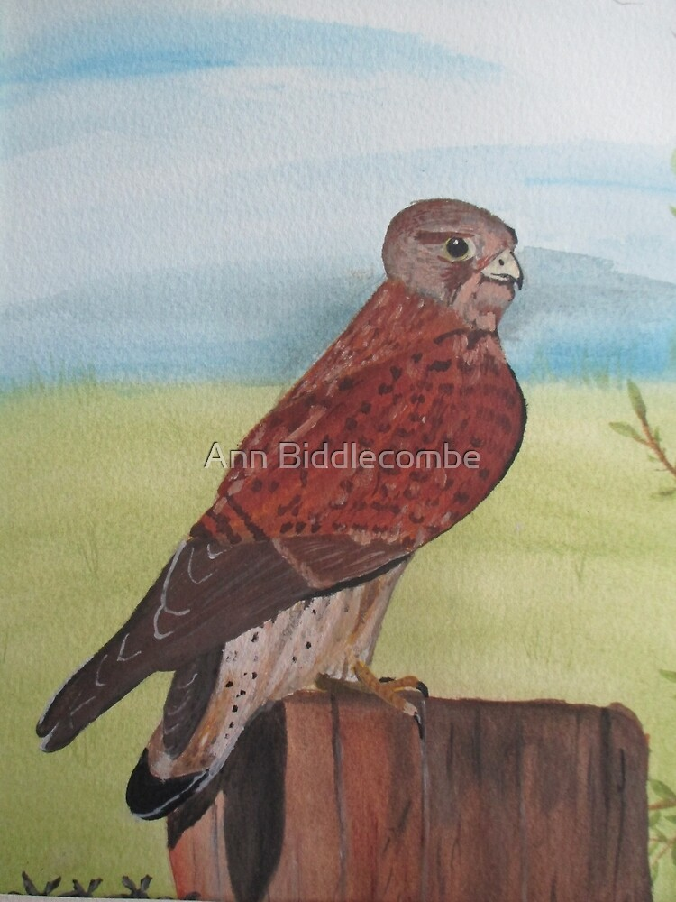 Bird of Prey by Ann Biddlecombe