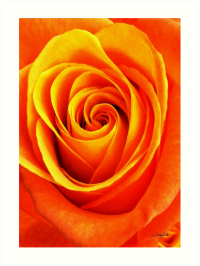 Vibrant Orange by Nathan Little