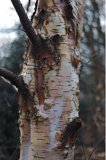 Birch Tree by Blinxy