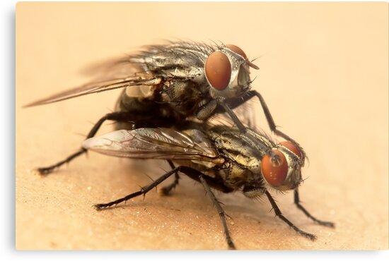 Pairing Flies by IngenuityDesign