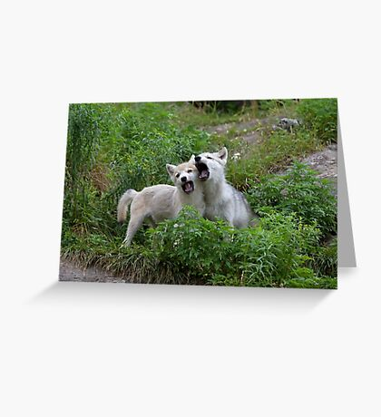 Howling good time - Arctic wolf pups Greeting Card