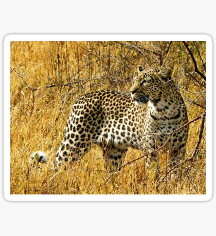 Leopard on the prowl Sticker