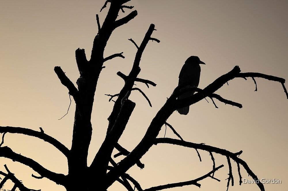 Raven Tree II BW Toned by David Gordon