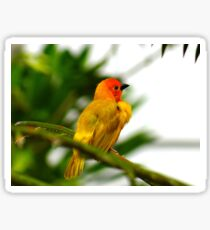 Through a child's eyes - close up yellow and orange bird 3 Sticker