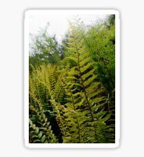 Forest ferns Sticker