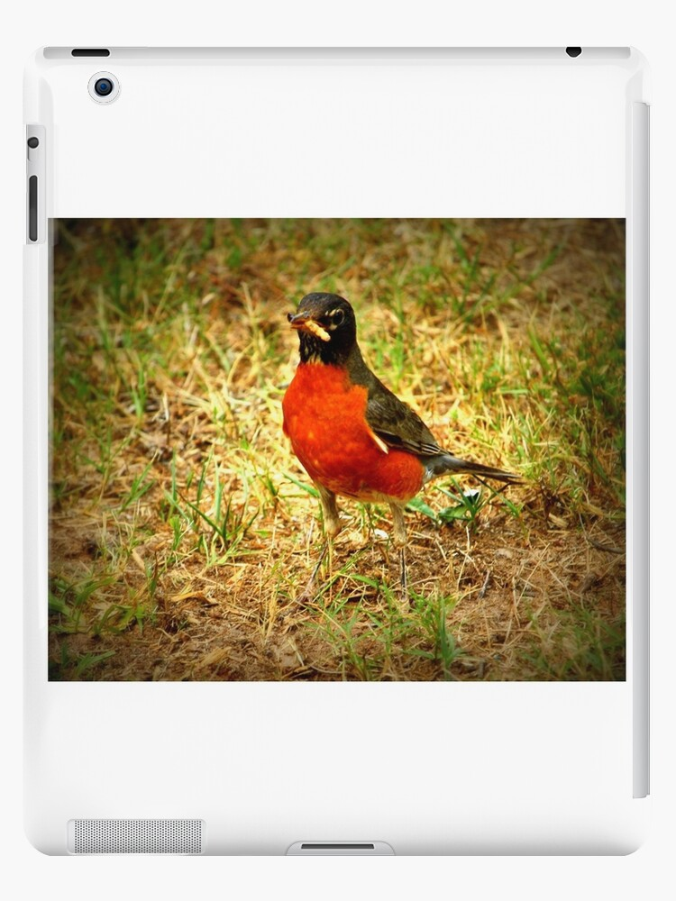 Robin Red Breast by Toccoa