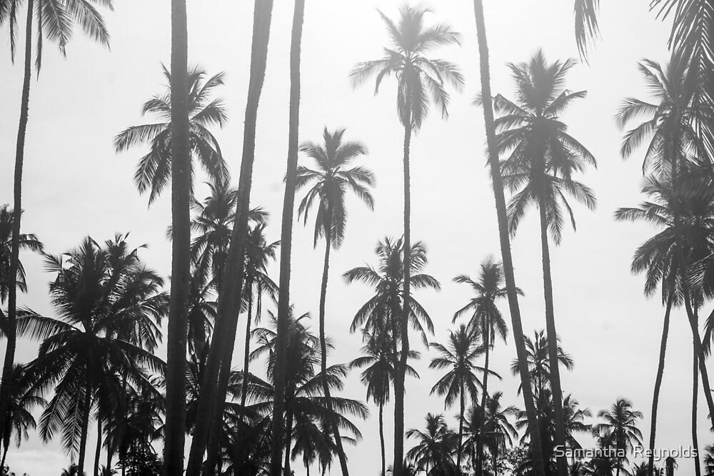 Paradise palms by Samantha  Reynolds