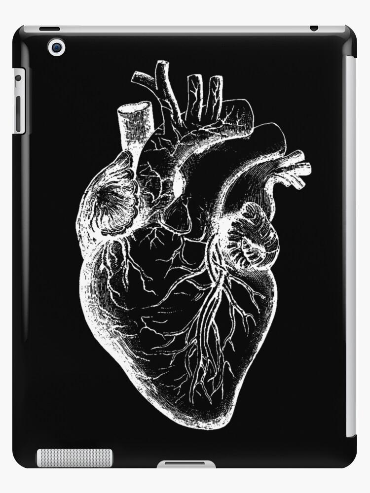 Vintage Anatomy: Anatomical Heart by lafayettecanada