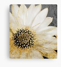 Gold and White Daisy Canvas Print