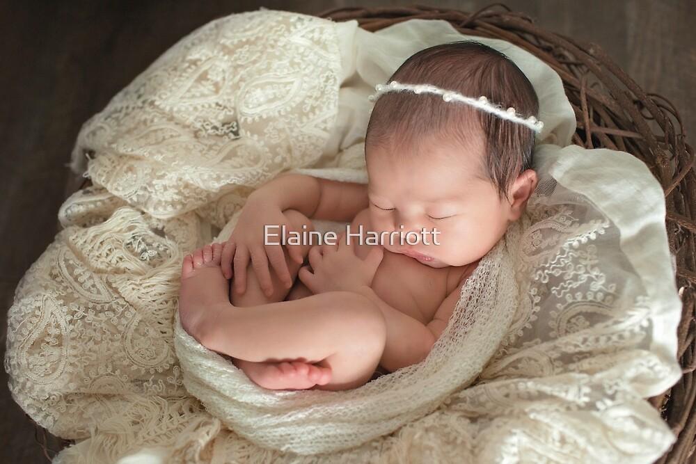 Lily ~ 7 days by Elaine Harriott