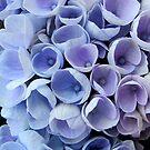 Blue Hortensia by bubblehex08