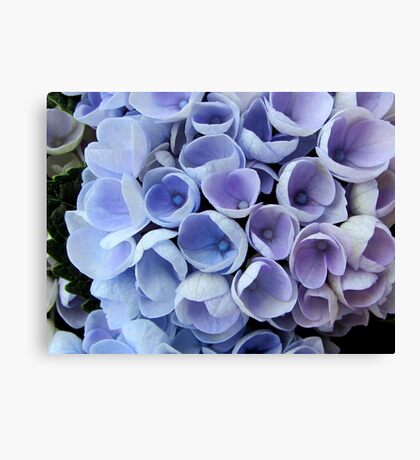 Blue Hortensia Canvas Print