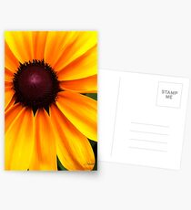 Yellow and Purple Postcards