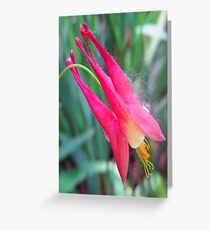 little pink Greeting Card