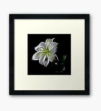 White Flower  Framed Print