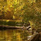 Autumn Lights by Barbara  Brown