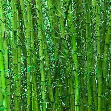 Green and serene bamboo by JeffFrank