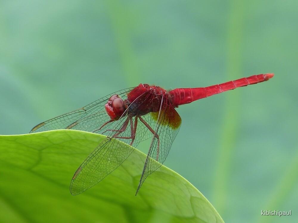 Green Leaf Red Dragon by kibishipaul