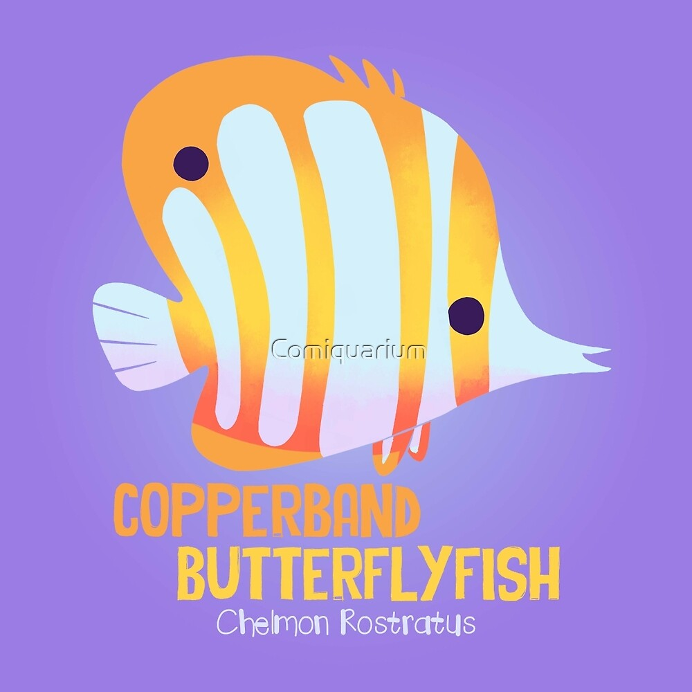 Copperband Butterflyfish by Comiquarium