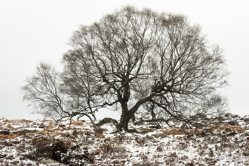 Surrounded by Winter by John Dunbar