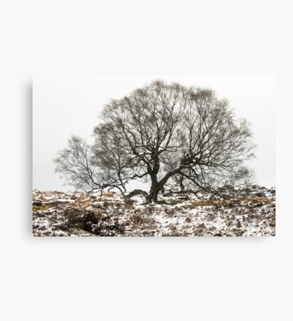 Surrounded by Winter Canvas Print