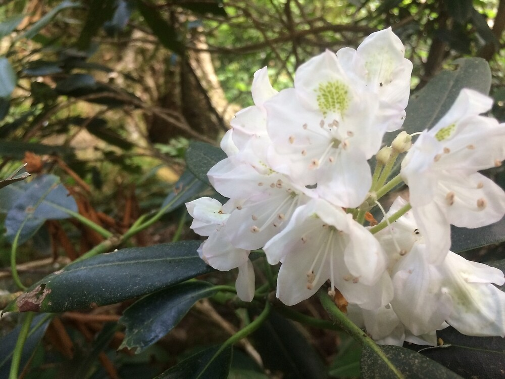 Smokey Mountains- Beautiful Flowers by BansheeCrash