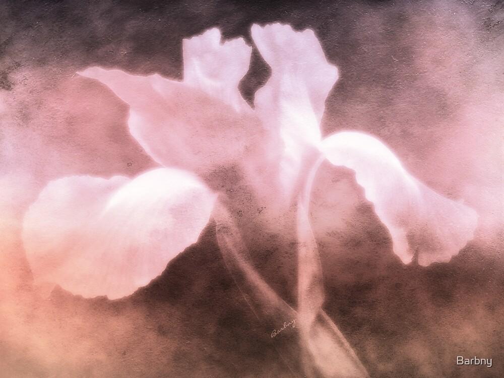 Pink Iris by Barbny