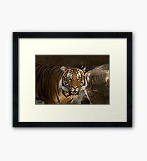 Tiger Wildcat Framed Print