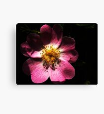 Bright Pink Macro Detailed Flower Canvas Print