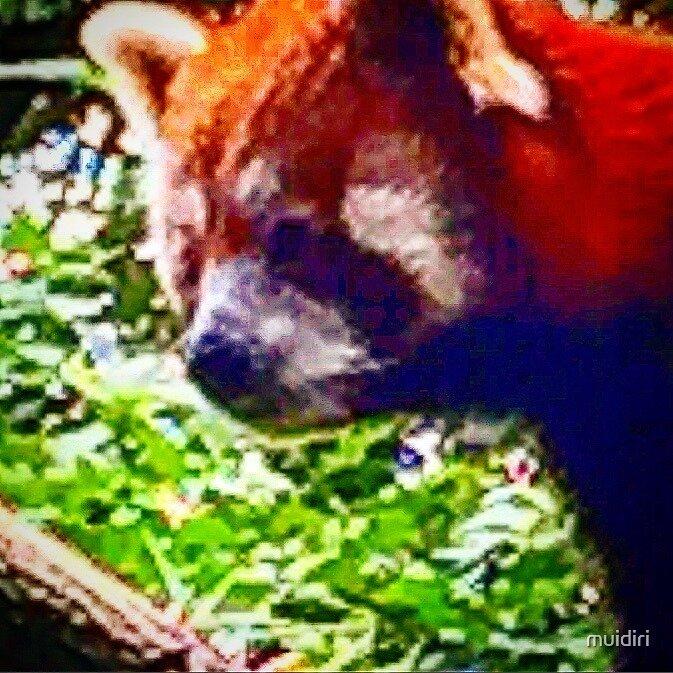 ded panda by muidiri