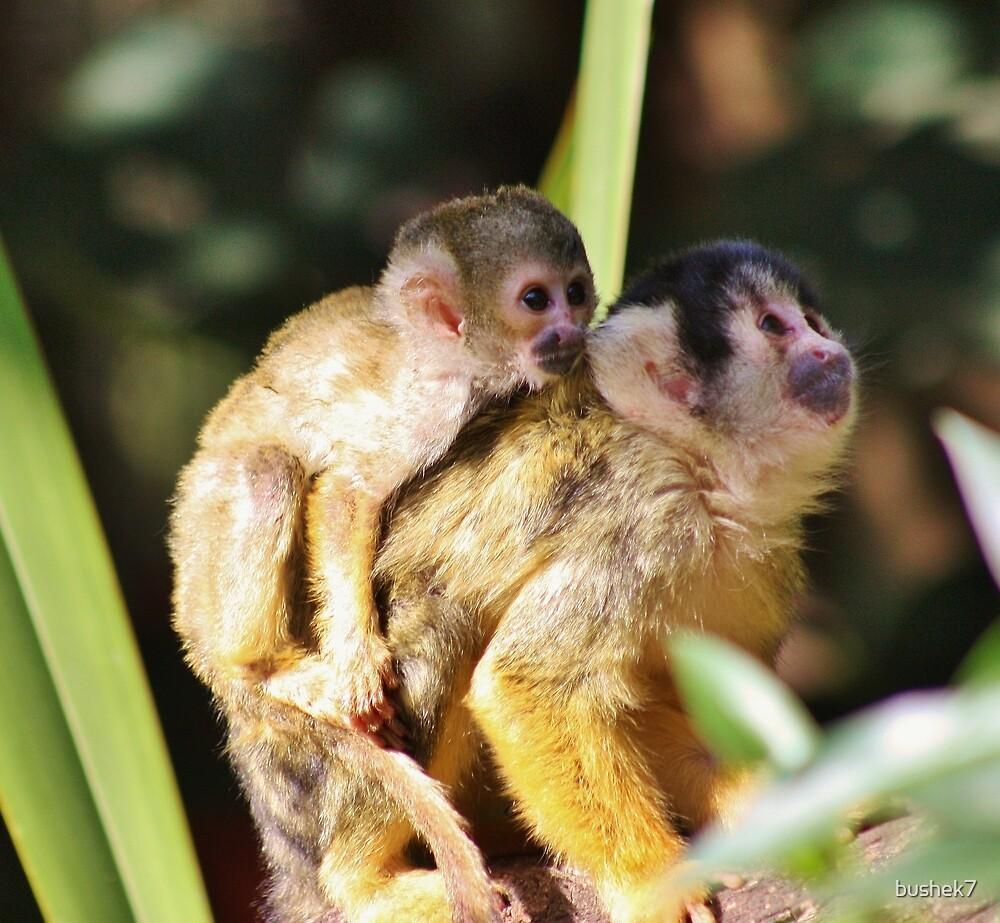 Monkey love by bushek7