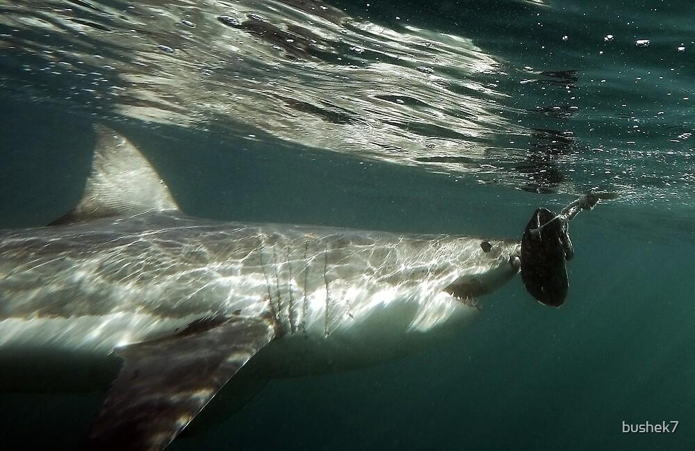 A Hungry Great White Shark by bushek7