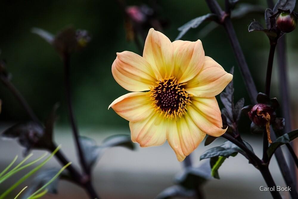 Flower in Bloom by Carol Bock