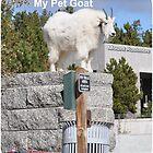 My Pet Goat by godakota