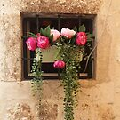 The Window With Peonies...........................Dubrovnik by Fara