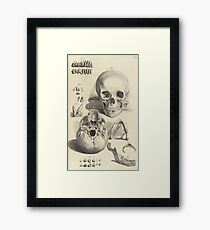 Anatomy of skulls Framed Print
