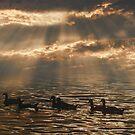 Evening Swim by sundawg7