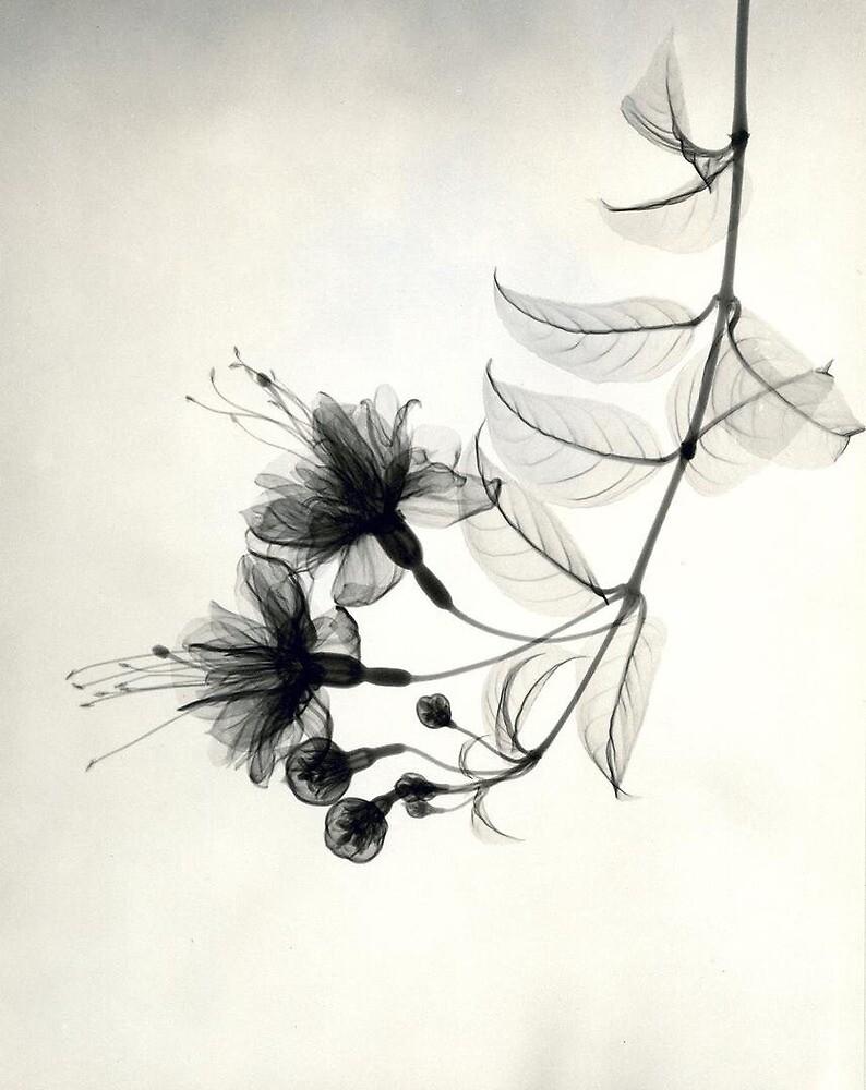 X-Ray of a Flower by Jadiek