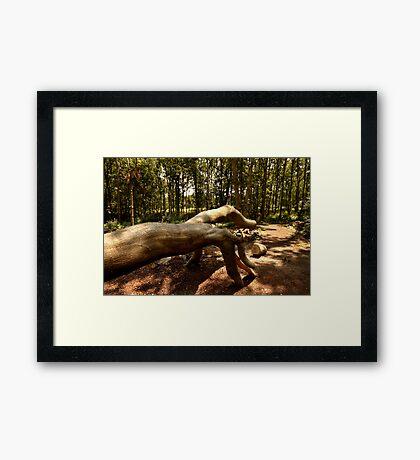 Shows Us The Way - Fallen Tree, Bowdown Woods Framed Print