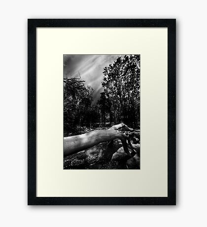 There's Something In The Woods Framed Print