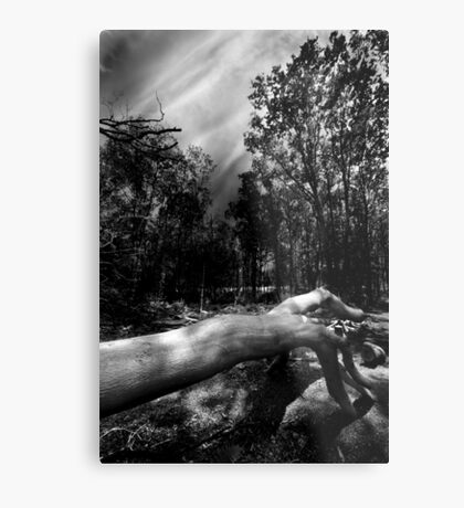 There's Something In The Woods Metal Print